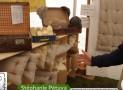 Stéphanie Pétuya Création pure laine : Marché bio D'Alsabrico