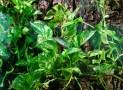 Réaliser et faire un terrarium avec du liège